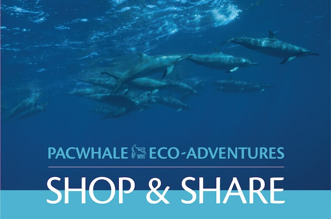 PacWhale Eco-Adventures Shop & Share Banner